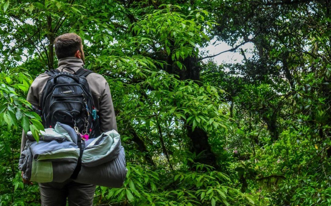 E-commerce, se repérer dans cette forêt amazonienne