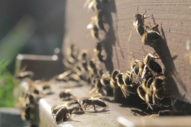 abeilles sur une ruche