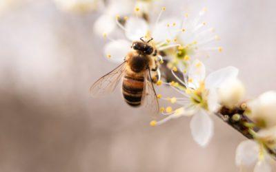 CERITEK s'engage pour les abeilles